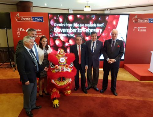 Cherries from Chile begin multimillion dollar promotion in China